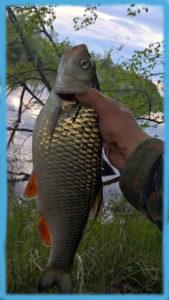 Клязьма-недалеко-от-Аббакумово-рыбалка-голавль
