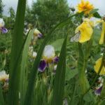 Цветет и пахнет, д. Аббакумово