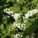 Весна пришла, д. Аббакумово