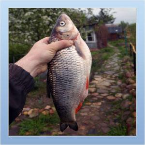 Рыбалка в д. Аббакумово